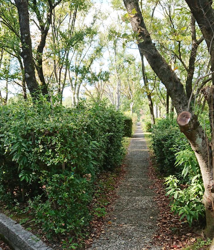 自然文化園のジブリに出てきそうな道