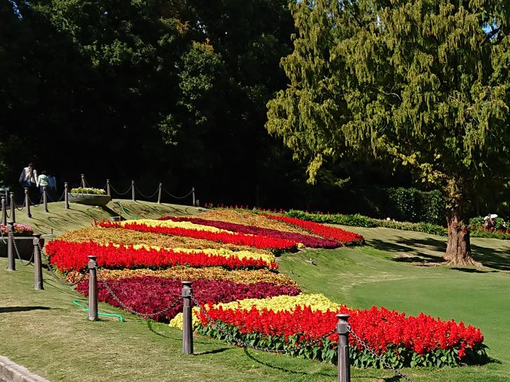 万博記念公園の太陽の塔周辺の植物