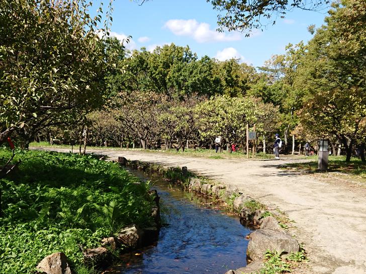 自然文化園の川沿いの道
