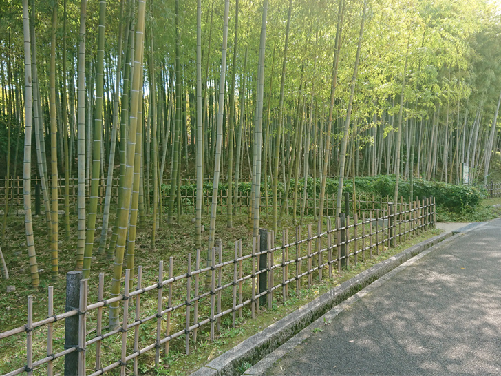 自然文化園の竹林