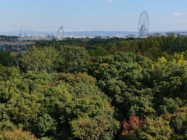 自然文化園のソラードの展望台からの眺め